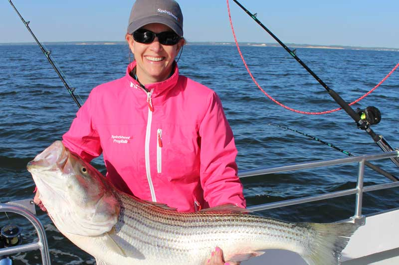 giant trophy rockfish on chesapeake bay