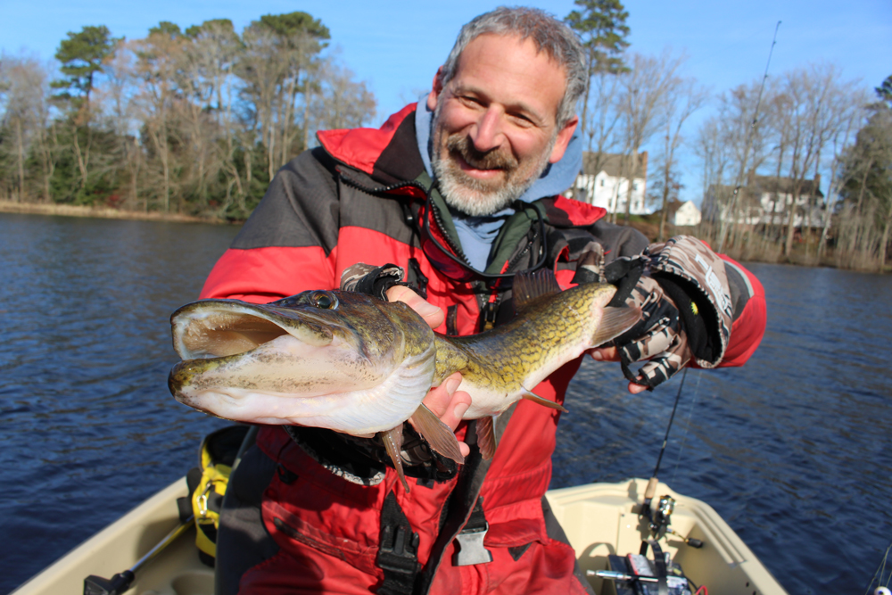 fishing for chain pickerel