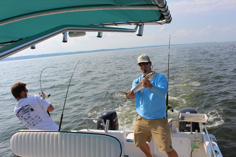 anglers troll for spanish mackerel