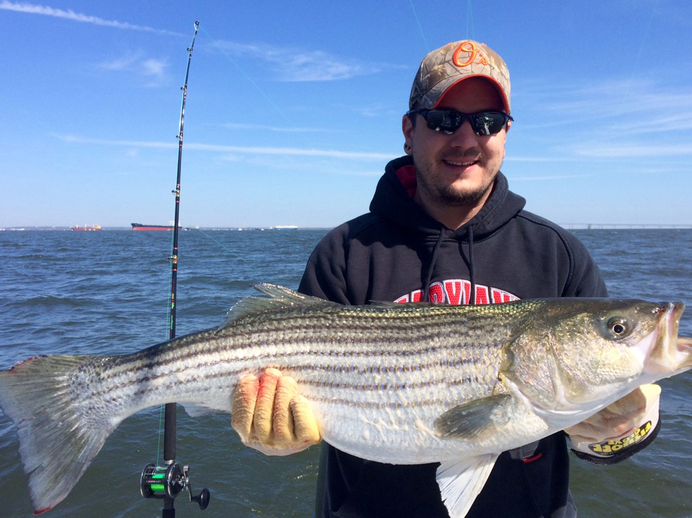 trophy spring strip[ed bass on chesapeake bay