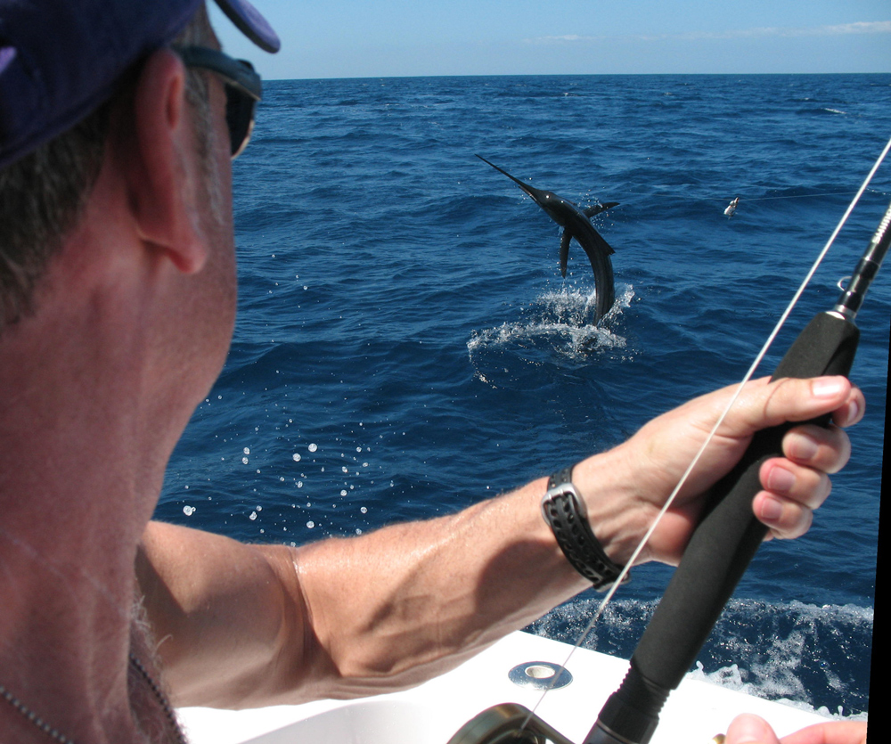a white marlin jumping