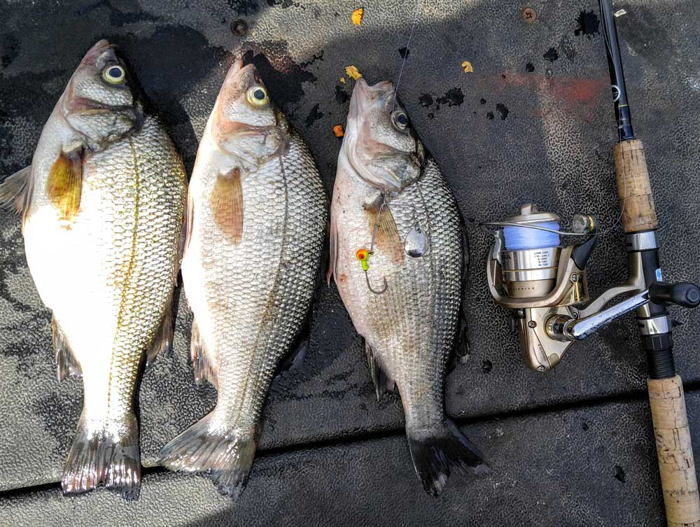 Fishing For White Perch | FishTalk Magazine