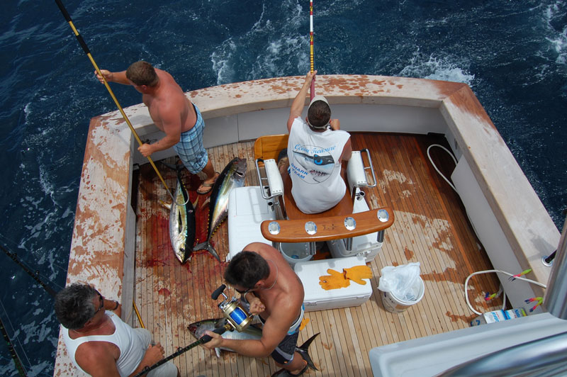 trolling for yellowfin tuna